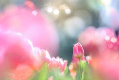初春のよろこび