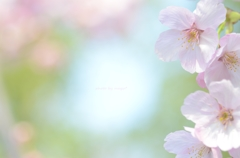 春のよろこび