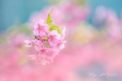 春色パステル