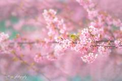 春彩つつみ