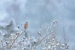 粉雪が舞う