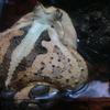 蛙も背中で語るです!