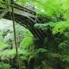 新緑のこおろぎ橋