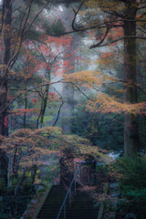 朝靄の古寺へ