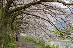 桜並木の下をお散歩♪