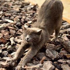 アルハンブラ宮殿にいた猫