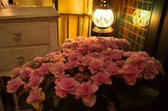 ランプの明かりの紫陽花