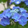 実家のブルー