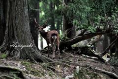 奈良の鹿は神の使いです。
