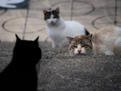 のら猫の世界