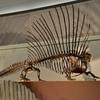 エダフォサウルス
