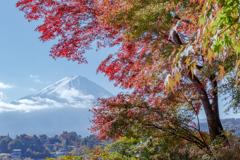 富士三昧643