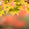 2013 秋の日光5 ギャラリー