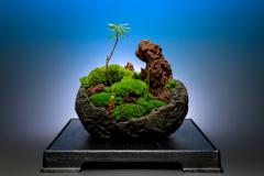 癒しの苔盆栽♬