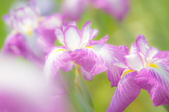 季節の花々②