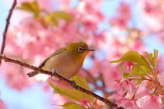 春っていいな~(^^♪