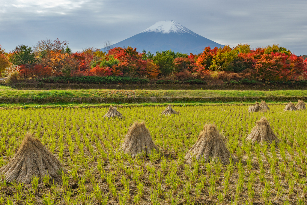 富士三昧709