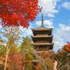 京都紅葉2019-①