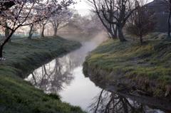 忍野の春④