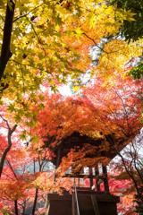 錦秋の平林寺④