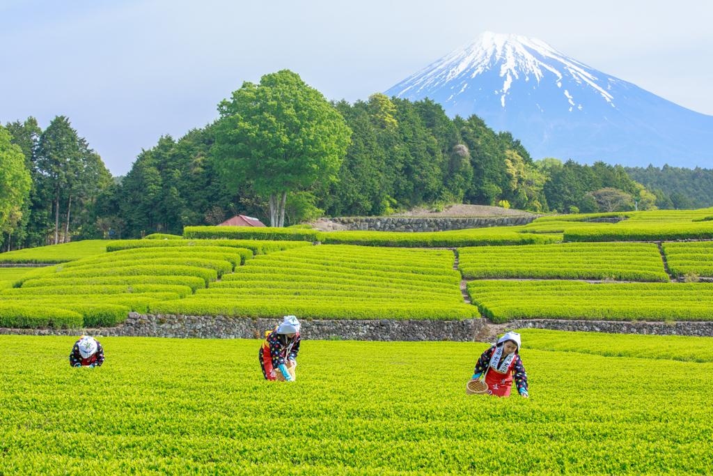 富士三昧563