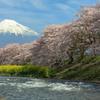 富士三昧546