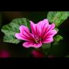 季節を彩る花々part.3 ⑩