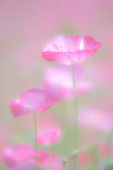 季節の花々③