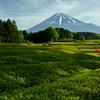 富士三昧451 お茶祭り