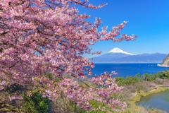 富士三昧698
