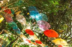 the rainy season umbrella