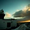 lighthouse sunset birds