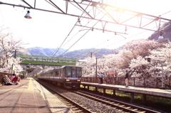 お花見ステーション 2