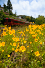 Wild Flower Express
