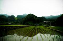deep green heritage