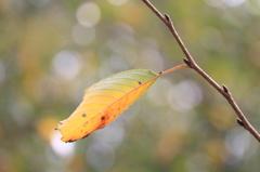 秋色を見つけに♪