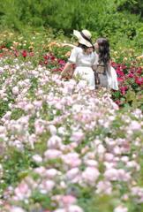 薔薇の散策♪