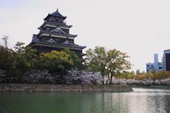 お堀の桜♪