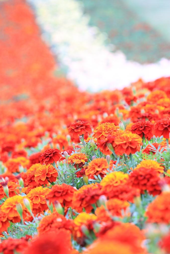 花のライン♪