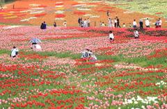 花の絨毯♡