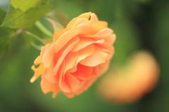 オレンジのvirtue♪