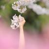 春に手を伸ばして
