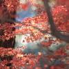 紅葉と松葉