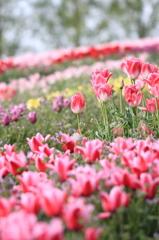 夢見る花園
