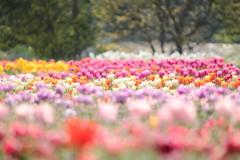 七色の花畑