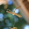 軒先の蜻蛉