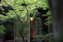 深緑の茶屋