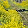 花咲く沿線