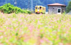 ルビーの花畑