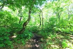 森林への誘い